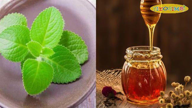 Cách chưng lá tần dày với mật ong