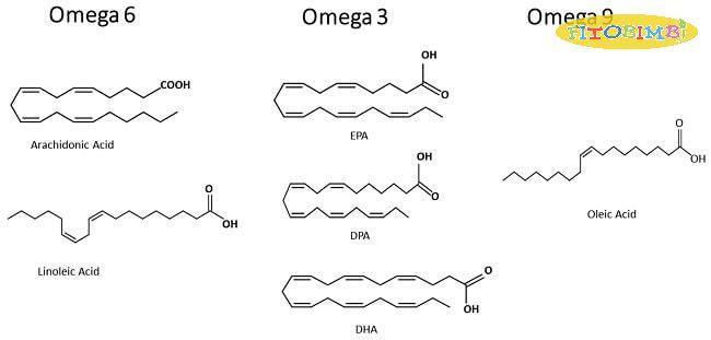 Cấu tạo hóa học của Omega 6