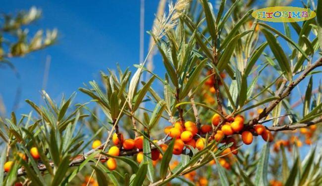 Một số nguồn thực vật chứa một lượng nhỏ SDA