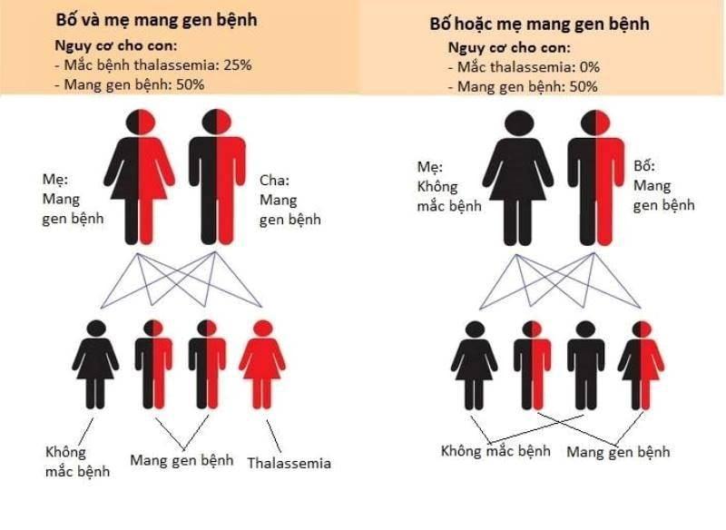 Sơ đồ di truyền của bệnh từ đời bố mẹ sang con