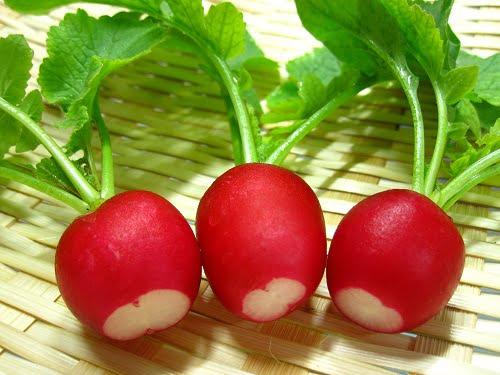 Củ cải đỏ là thực phẩm giàu sắt cho bé ăn dặm