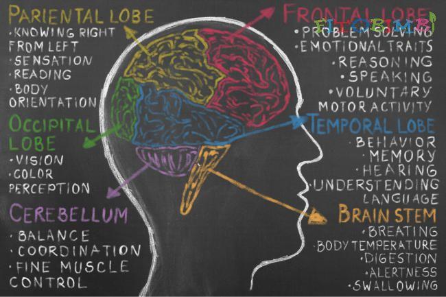 Trẻ tự kỷ có cấu trúc não bộ khác người bình thường